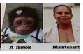 Photomontage de Anne Sophie Duclerc assimilant Christiane Taubira  au singe.  Compte twitter de Christiane Taubira.