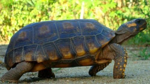 La lenteur administrative est semblable à la lenteur de la tortue. Crédit image:investiraucameroun.com
